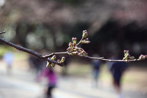 駒沢公園~多摩サイ~羽田~奥沢42キロ