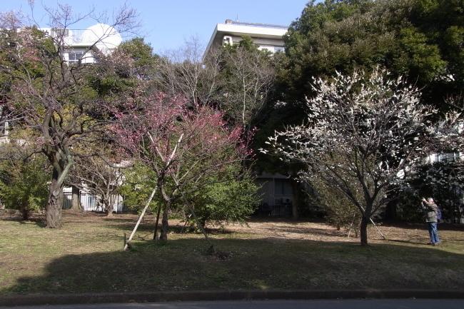 駒沢公園~羽村阿蘇神社往復93キロでバテた