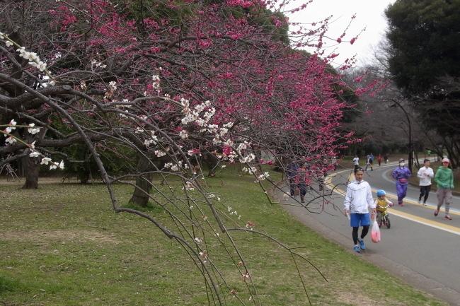 駒沢公園50キロ雨降らなかった