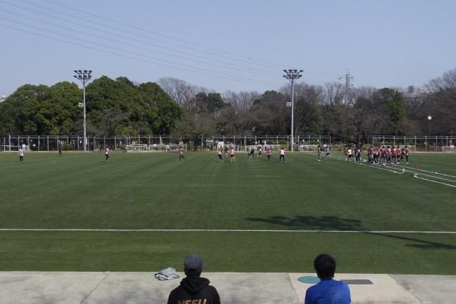 駒沢公園45キロ桜はまだ咲かない