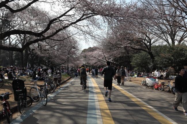 駒沢公園~多摩サイ~羽田弁天橋往復51キロ桜満開とか