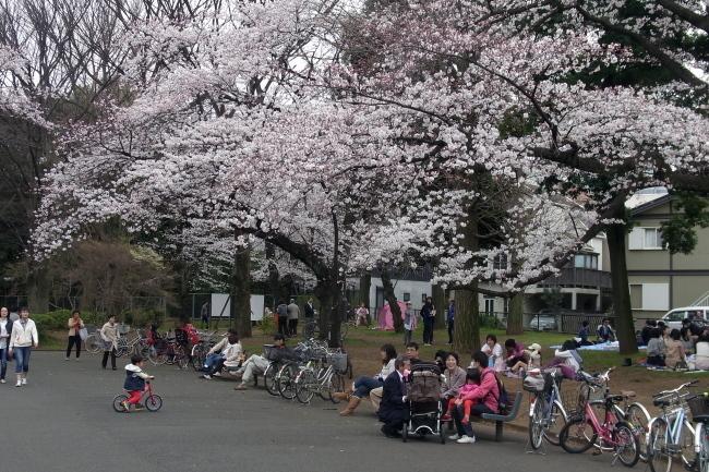駒沢公園43キロ天気予報通り