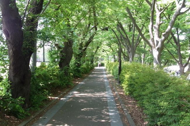 駒沢公園50キロ今日はシンコ・デ・マヨですと