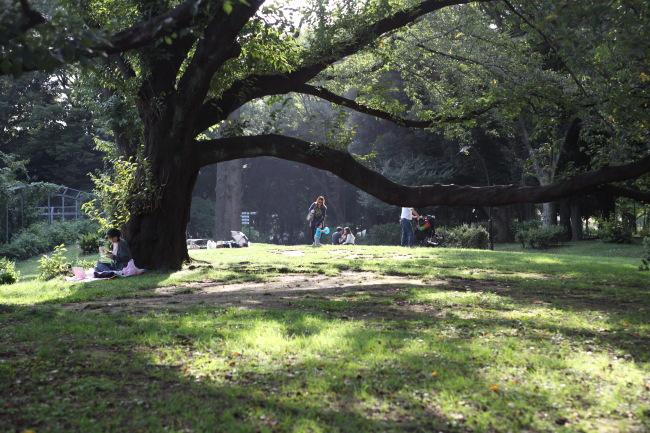駒沢公園~羽田弁天橋往復51キロ池上蓮月も見てきた