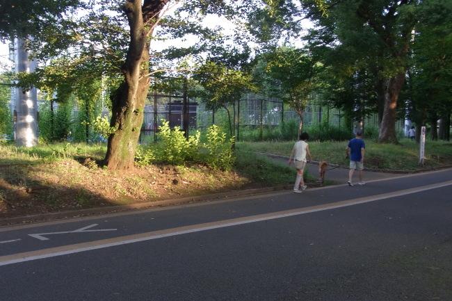 都心35.4℃駒沢公園周回51キロ