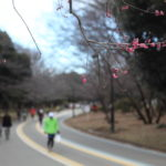 駒沢公園の梅が咲いてまた春が来るんだなあ