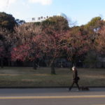 花粉が少ないでしょう?駒沢公園50キロ