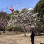 駒沢公園を走ってからまた秋葉原へ