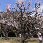 暖かい駒沢公園を50キロ走った