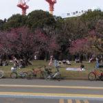 駒沢公園走ってから目黒不動尊へ57キロ