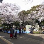 お花見が始まった駒沢公園
