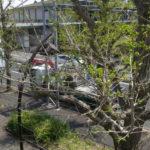 駒沢公園の新しい体育館は中を仕上げ中