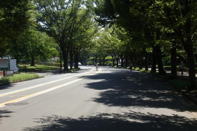 昼前の駒沢公園